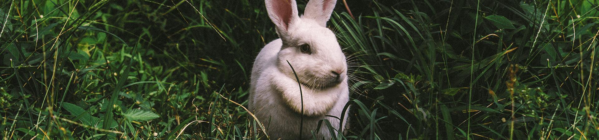 Rabbit insurance