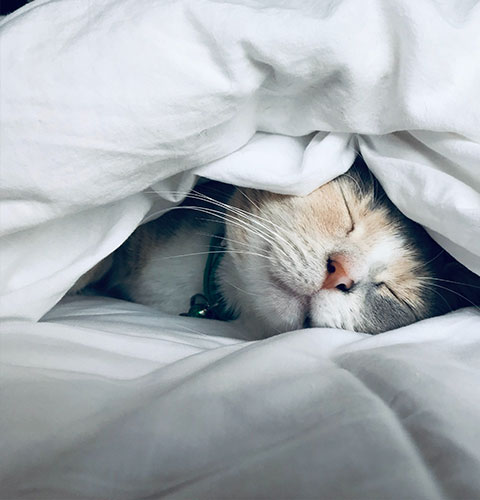 Protect your cat from as little as £1.79 per week